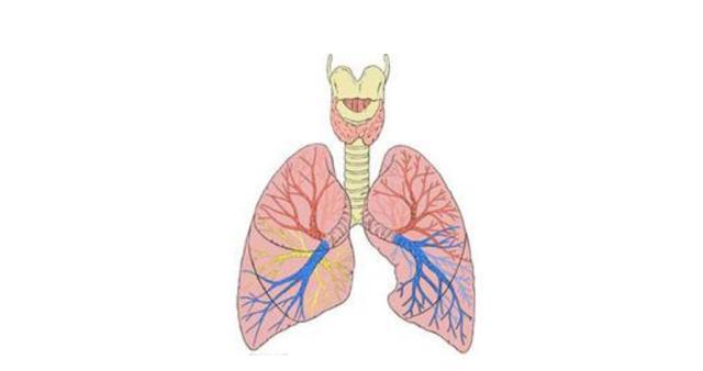 卡在喉咙里的痰直接咽下去,对人体有影响吗?祛痰专家教你化痰
