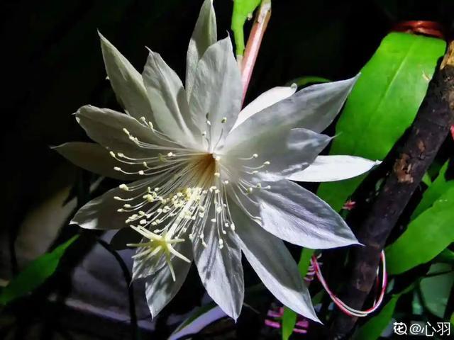 人养花,花也养人,9种花能治病,连医生也爱养!
