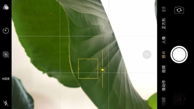 手机拍照这样对焦,照片会更清晰