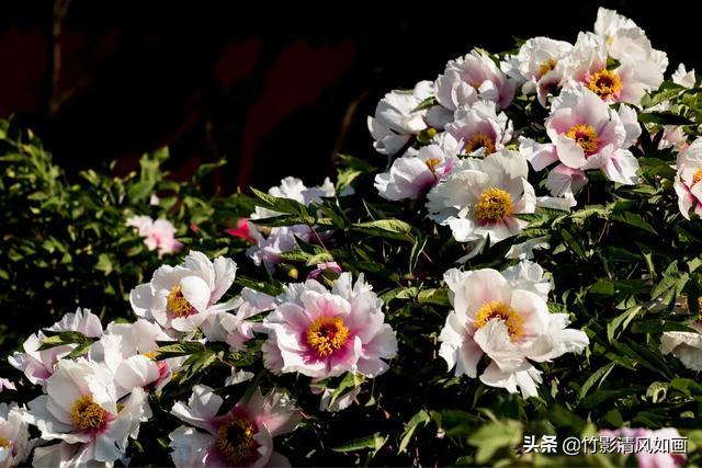 """单反相机的""""M档""""在花卉摄影中的使用技巧"""