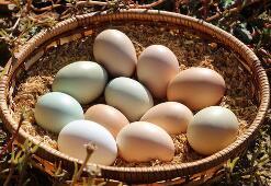 价格较贵的土猪、土鸡、土鸡蛋,真的有营养吗?