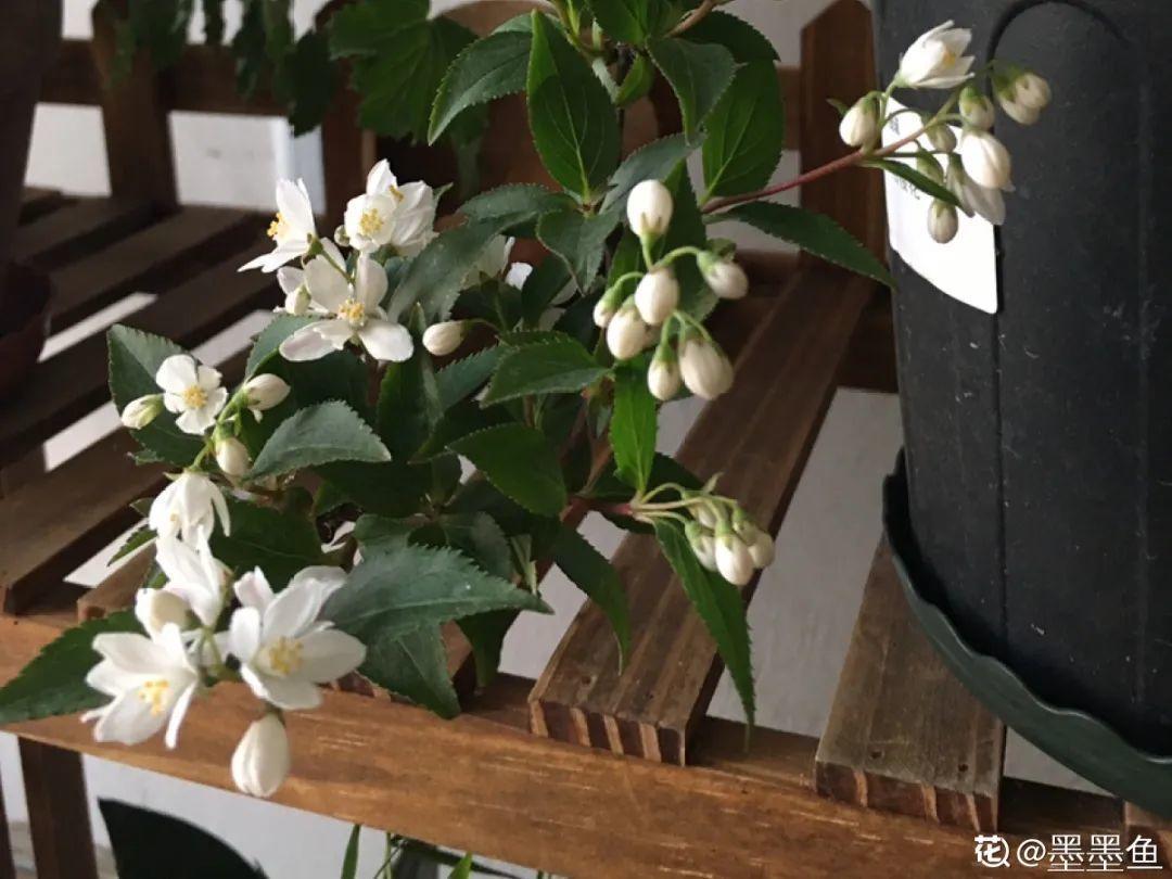 适合室内养的小众盆栽,格调高、有气质
