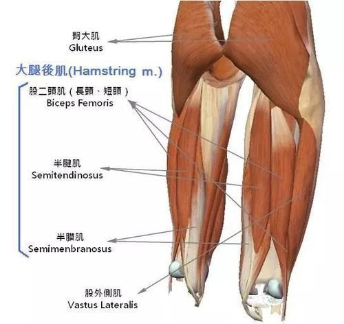 """腿是人体第二""""心脏""""日常练腿做好4件事,腿有劲,老得慢"""