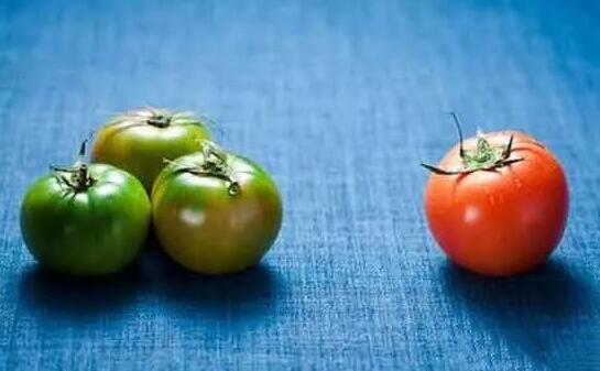 为什么西红柿没有以前好吃了?科学家给我们讲出了实情