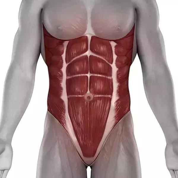 网红动作平板支撑,每天做,真的能减肚子吗?