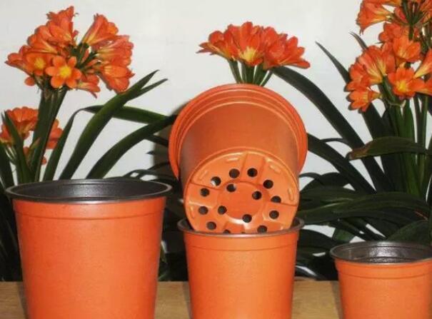 养花时怎样选择花盆的大小和深浅?教你在养花路上少走弯路